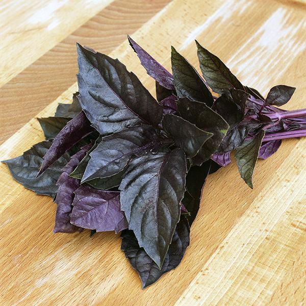 Dark Purple Opal Basil